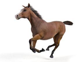 horserender